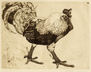 Cockerel etching